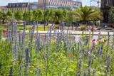 Trzecie najbardziej zielone miasto w Polsce to Katowice. Lasy, parki i stawy stanowią ponad połowę powierzchni miasta