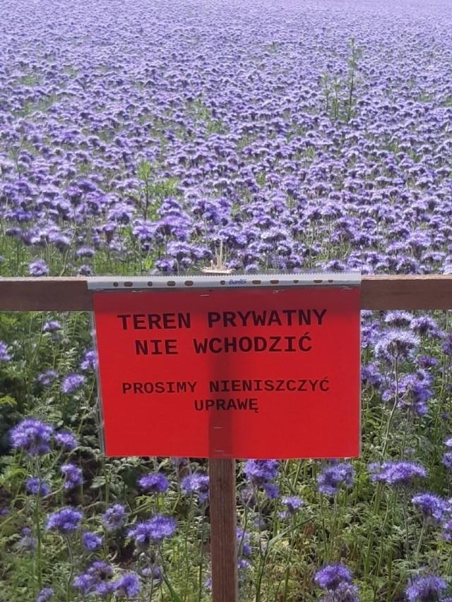 Właściciele pola oznaczyli je w obawie przed wtargnięciem niepowołanych osób