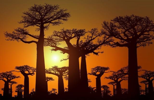Potrafią przetrwać lata suszy, skrajne temperatury, a nawet ogień. Zobaczcie niezwykłe rośliny świata.