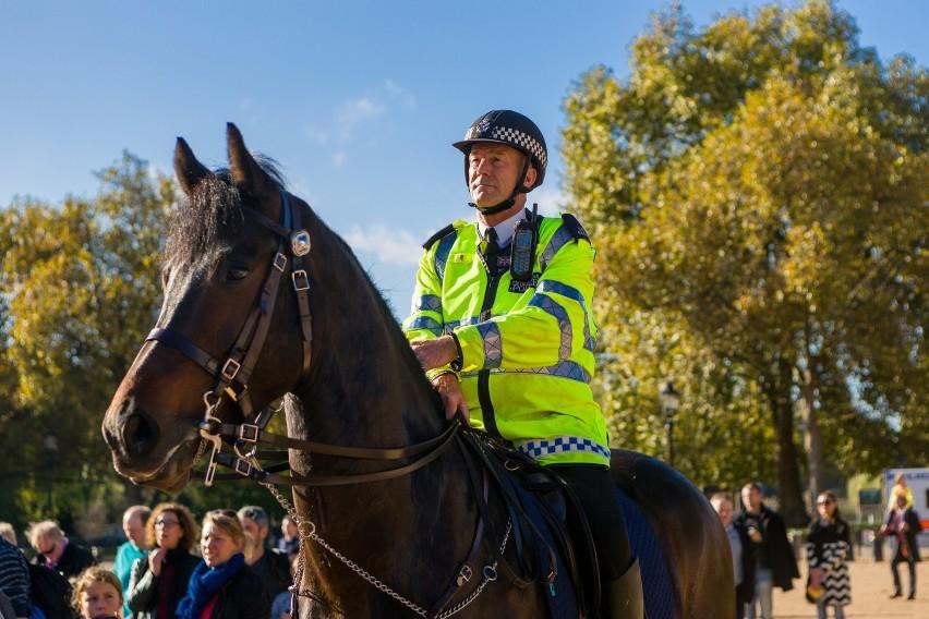 Policja - konieKonie z w policji pracują przy:- służbie...