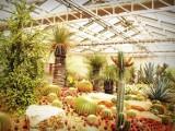 Uwielbiane przez warszawiaków wydarzenie powraca. Sprzedaż roślin w Elektrowni Powiśle już w weekend. Nowe rośliny kupimy od 8 zł