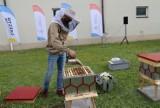 W Częstochowie powstała miejska pasieka. Zamieszka w niej 100 tysięcy pszczół. Specjalne ule powstały z recyklingu