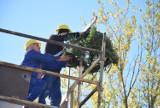 Przystań Widna 2A na Witominie w budowie ZDJĘCIA