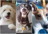Głogów - Dzień Psa 2021. Oto zdjęcia psów naszych Czytelników. Prawda, że urocze?