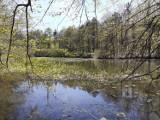 Bytom. Miechowicka Ostoja Leśna - idealne miejsce na wiosenny spacer
