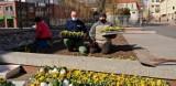 Wiosna w Pruszczu. Miejskie rabaty, skwerki nabierają kolorów, posadzono pierwsze kwiaty |ZDJĘCIA