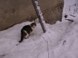 Bezdomna kotka i ludzie dobrej woli