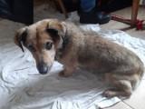 Psy uratowane przez TOZ w Opolu. Czy mają szansę na nowy dom? [ZDJĘCIA]