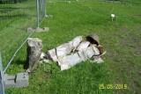 W parku leśnym na Muchowcu w Katowicach zniszczono pomnik Matki z dzieckiem ZDJĘCIA