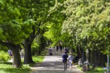 Fundacja Kultury bez Barier zorganizuje spacery po stolicy dla niepełnosprawnych. Sprawdźcie listę dostępnych wydarzeń