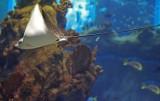 Opole. Jest zielone światło dla płaszczek i rekinów w ogrodzie zoologicznym! Inwestycja będzie kosztowała 14 milionów złotych