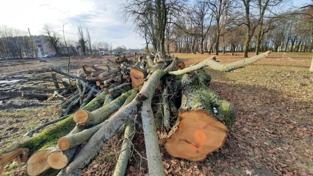 Drzewa wycięto m.in. pod budowę drugiej nitki drogi krajowej nr 22.