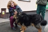 Zoo Poznań: Dwa psy ze schroniska zamieszkały w ogrodzie zoologicznym [ZDJĘCIA]