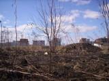 Wypalanie traw: Płoną trawy i drzewa, giną zwierzęta (materiał Dziennikarza Obywatelskiego)
