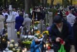 Jak znaleźć grób na cmentarzu w Poznaniu? Wyszukiwarka grobów pomoże namierzyć nagrobek. Sprawdź!