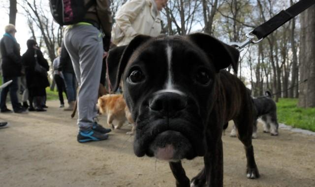 Ogród Saski: Radni zajmą się sprawą zakazu wprowadzania psów