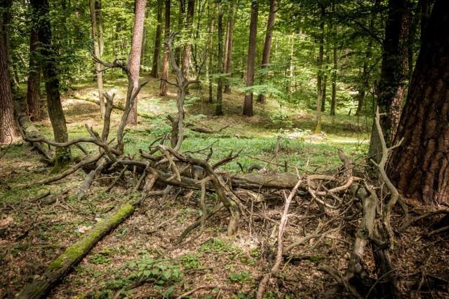 W Górznieńsko-Lidzbarskim Parku Krajobrazowym na turystów czeka ponad 250 kilometrów szlaków rowerowych i pieszych, a wzdłuż nich rozmieszczone są tablice z propozycjami ćwiczeń oraz punkty pomiaru tętna
