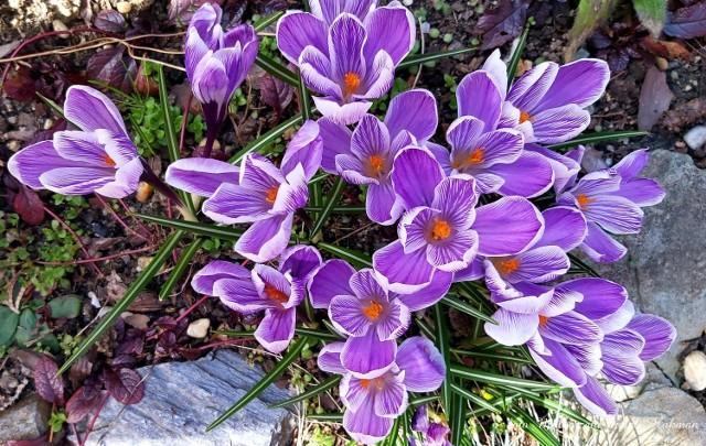 Dzisiaj pierwszy dzień kalendarzowej wiosny