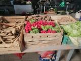 """Ceny owoców i warzyw na bazarze """"Mój Rynek"""" w Dębicy. Zobacz, w jakiej cenie są jabłka, truskawki czy kalafior [ZDJĘCIA, CENY]"""