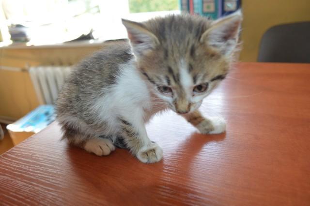 Kocięta porzucone na przystanku w Sulejowie szukają nowych domów