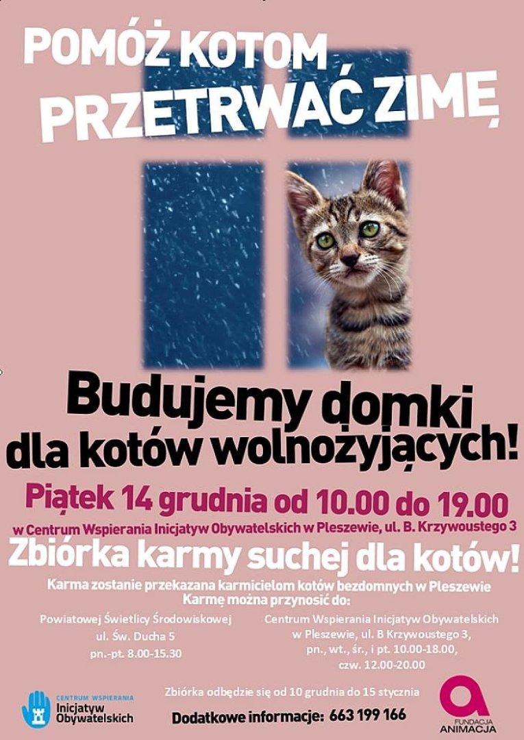 c62b8e7d880688 Pomóż kotom przetrwać zimę