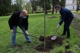 W Parku Lubomirskich powstaje Aleja Pamięci na cześć zasłużonych, zmarłych pracowników PWSW w Przemyślu [ZDJĘCIA]