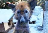 Krańcowo wychudzony, wygłodzony i chory pies wegetował na podwórku w Głowience koło Krosna. Uwaga, drastyczne zdjęcia!