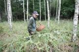 W lasach  pod Toruniem pojawiły się pierwsze w tym roku grzyby. Sprawdź, gdzie i co można znaleźć