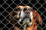 Inowrocław. Nasz Czytelnik popiera radnego Jacka Tarczewskiego. Słowo adopcja dotyczy tylko ludzi, a nie psa czy innych zwierząt