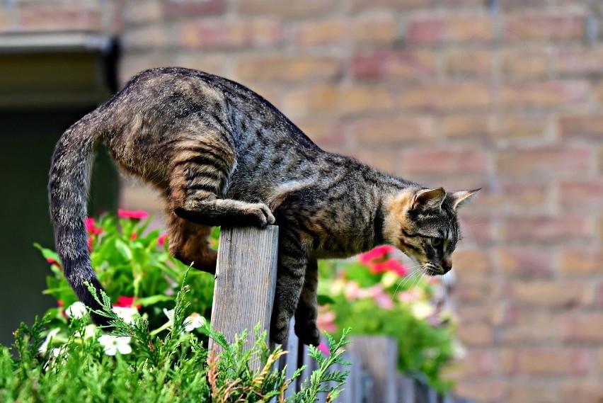 Zapachu cynamonu nie lubią również koty (a sam cynamon jest...