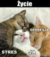 Blue Monday to najbardziej depresyjny dzień w roku. Ale warto poprawić sobie humor! Zobacz (anty)depresyjne MEMY!