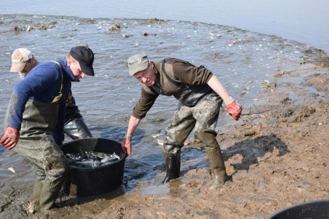 Mnóstwo ryb wyszukiwania darmowe randki