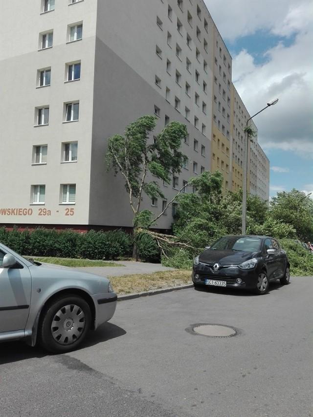 Gliwice, przy ul. Kochanowskiego złamało się drzewo