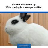 #KrólikWielkanocny: zobacz króliki naszych Czytelników!