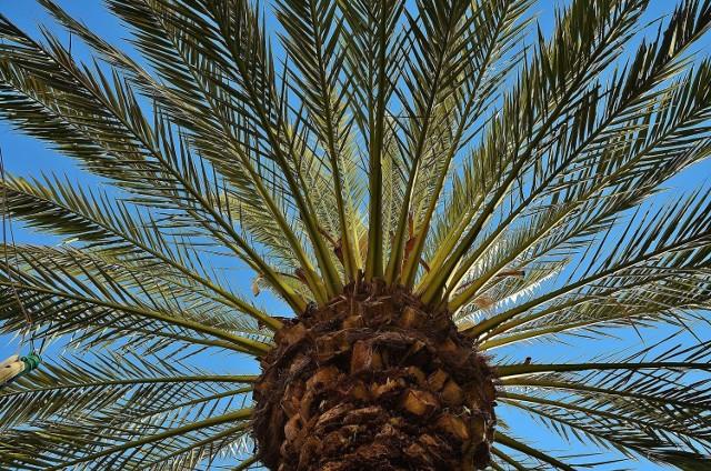 Wśród najstarszych wyhodowanych roślin są zarówno drzewa, jak i kwiaty i rośliny użytkowe (zdjęcie ilustracyjne).