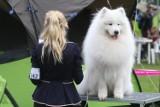Wystawa szpiców i psów ras pierwotnych na Stadionie Olimpijskim [MNÓSTWO ZDJĘĆ]