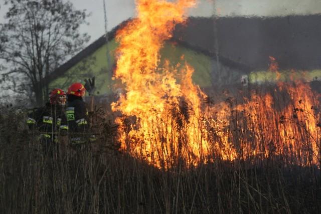 Pożar traw zajmują duże powierzchnie. Angażują duże siły i środki straży....