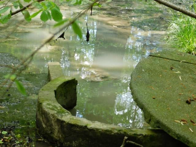 Zdjęcie wykonane kilka dni temu i umieszczone na fanpage Ekopark Wschodni - użytek ekologiczny