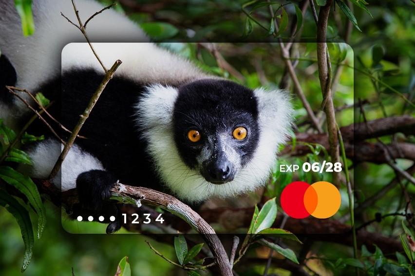 Zwierzęta zagrożone wyginięciem na kartach płatniczych. Znikną z powierzchni ziemi, gdy karta straci ważność