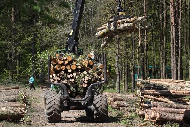 Kilkaset dorodnych, zdrowych sosen, wycięto w zeszłym roku na pograniczu gdyńskich dzielnic Karwiny i Dąbrowa