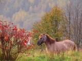 Muszyna. Złota polska jesień zawitała do uzdrowiska. W Muszynie jest żółto, brązowo i na czerwono [ZDJĘCIA]