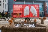 Sztuczne płuca w Bydgoszczy pokażą, jakim powietrzem oddychamy [zdjęcia]
