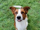 Psy do adopcji w Żarach. Zobaczcie zwierzaki, które można przygarnąć, poznajcie warunki i zasady adopcji w żarskim schronisku