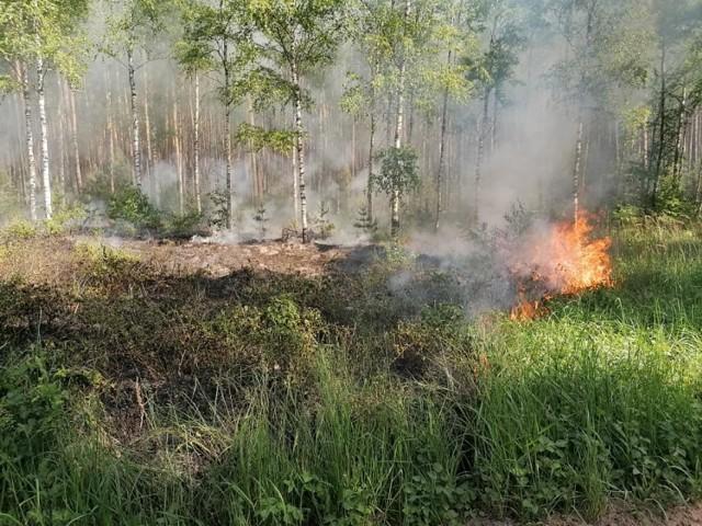 Tylko od poniedziałku do czwartku strażacy codziennie wyjeżdżali do pożarów lasów