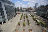 Katowice: Najpierw usuną wszystkie drzewa z rynku i 3 Maja. Potem posadzą nowe, bardziej odporne. Koszt operacji to ćwierć miliona