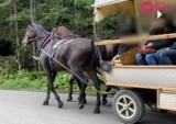 Tatry. Koń z Morskiego Oka jest zdrowy, a kuleć mógł z ekscytacji. Animalsi: to jakaś bzdura