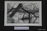 Stare zdjęcia Załęczańskiego Parku Krajobrazowego. Wystawa prac Romana Kędzierskiego w wieluńskiej bibliotece