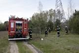 Pożar lasu na osiedlu Zadębie. Interweniowała straż pożarna ZDJĘCIA