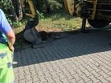 Kuriozum w Trzebielinie. Zwijają piękną drogę. Bareja we wsi (ZDJĘCIA)