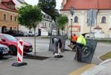 Wyremontowany Plac Stefanidesa w Zamościu zazielenił się. Trwa akcja sadzenia drzew w specjalne, wcześniej przygotowane miejsca